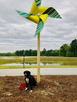 Pinwheels and a Pupper at Woodforest